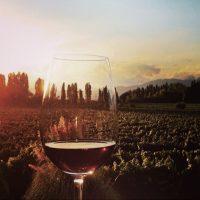winet-clube-de-vinhos1